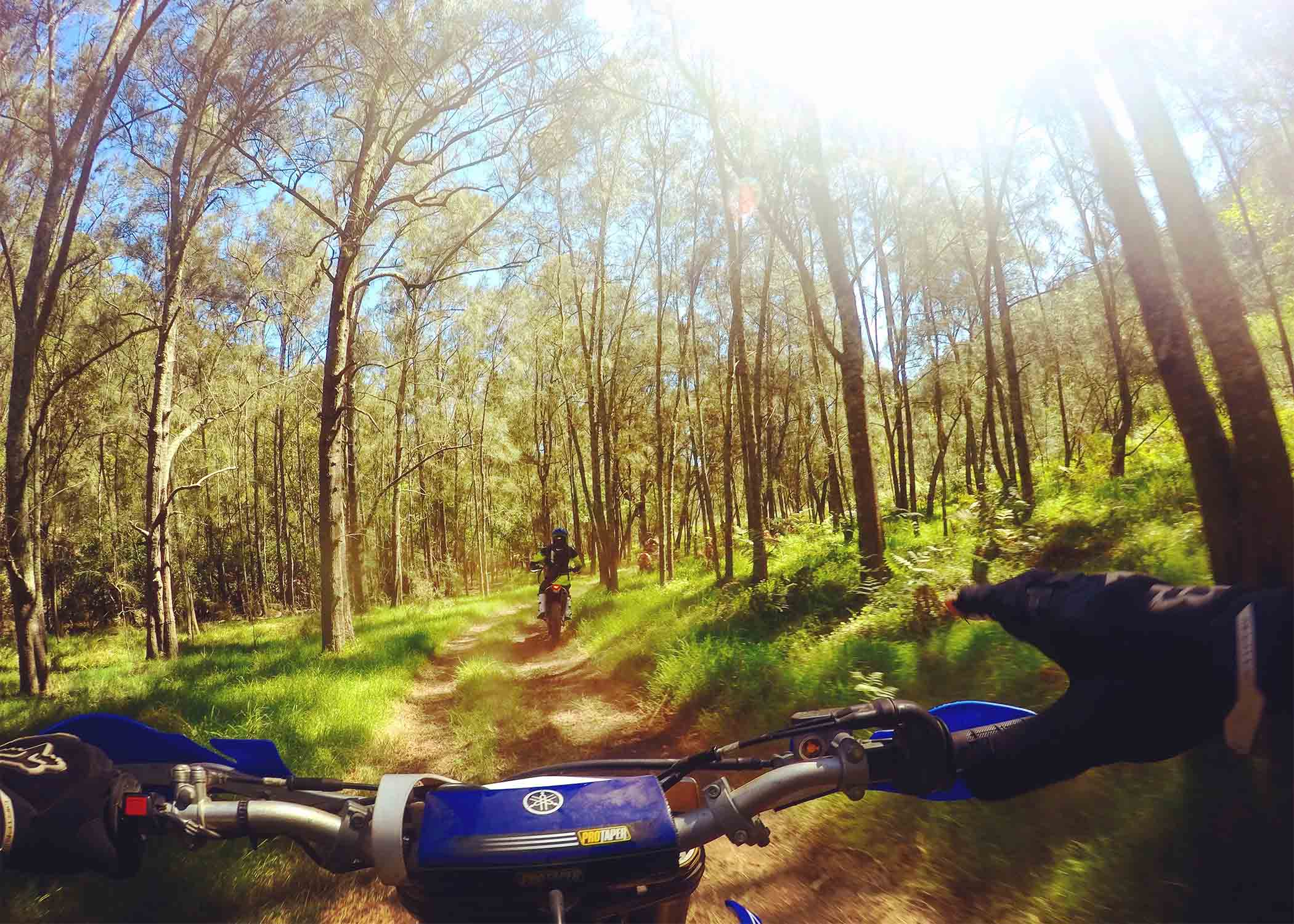 Dirt bikes in the woods