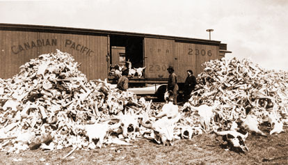 A historic photo showing large piles of bison bones.